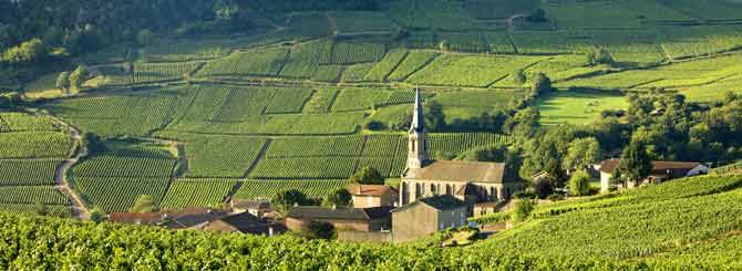 The World's Most Expensive Pinot Noirs